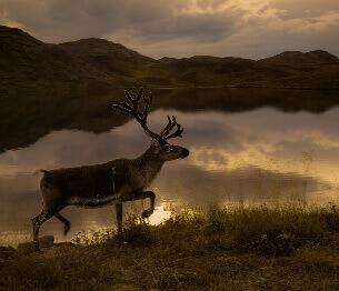 Reindeer Hunting 3