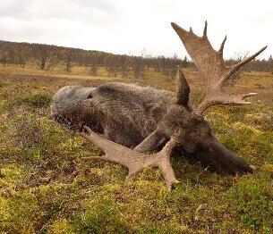 Moose Hunting 3