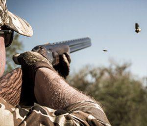 Dove and Pigeon Shooting