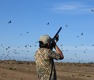 Dove and Pigeon Shooting 1