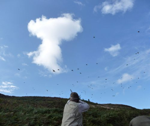 Partridge Shooting Scotland